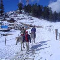 Best of Shimla & Manali Honeymoon Package By Car