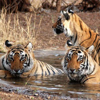 Golden Triangle With Jungle Safari Tours
