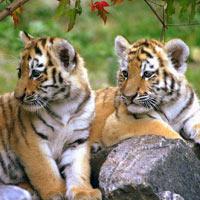 Madhya Pradesh Safari Tour