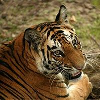 Golden Trianlge & Tigers Tour