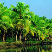 Exotic Kerala Tour Package with Air Fare