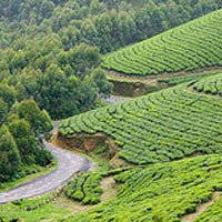 Kerala - Hills and Backwaters Package