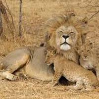Zulu Warrior & Wildlife Tour