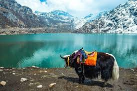 06 Nights & 07 Days Gangtok, Kalimpong & Darjeeling Tour