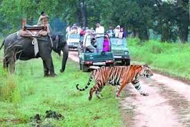 02 Nights & 03 Days Jim Corbett Tour