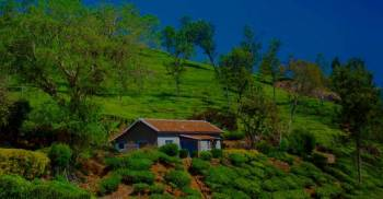 Munnar with Cochin Tour