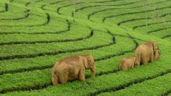Kerala Tour Packages 7 Days