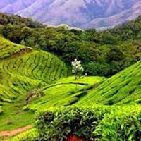 Spices & Palaces of Southern India Tour