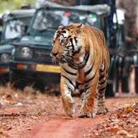 Ranthambore National Park Tour
