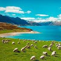 New Zealand North Island Tour