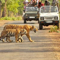 2 Jeep Safaris Tour