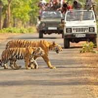 2 Jeep Safaris Tour