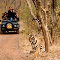 6 Jeep Safaris Tour