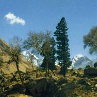 Har-Ki-Dun Trek (Garhwal - Himalayas - Moderate Trek) Tour