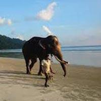 3 Island Tour (Andaman)