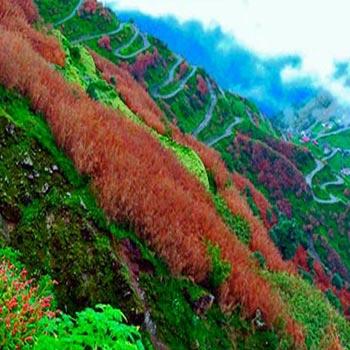 Gangtok Silk Route Special Tour