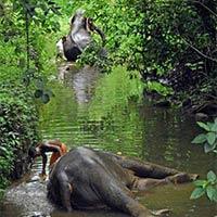 Element to Kerala Tour