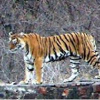 Khajuraho - Bandhavgarh Tour