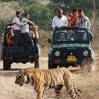 Madhya Pradesh Temple & Tiger Tour (7 Nights / 8 Days)