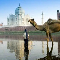 Wildlife Golden Triangle Tour