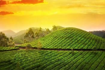 Authentic Kerala Tour