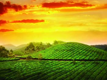 Romantic Munnar  (Honeymoon) Tour