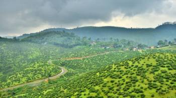 Group Munnar Package
