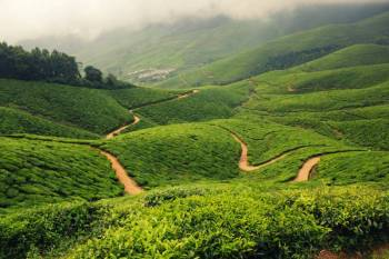 Beautiful Munnar to Alleppey-Standard Tour
