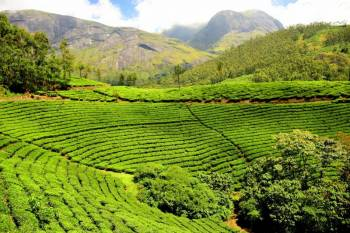 Beautiful Munnar to Alleppey-Honeymoon Tour