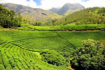 Beautiful Munnar to Alleppey-Honeymoon Tour