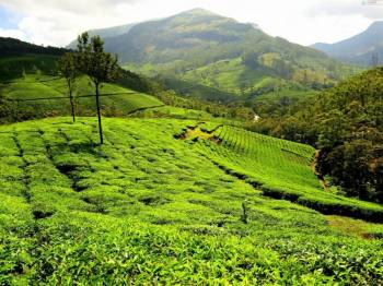 Kerala with Kovalam Tour  - Standard