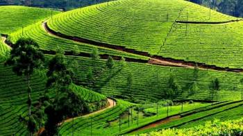 Kerala - A perfect for Holidaying and Honeymoon (6 Nights – 7 Days)