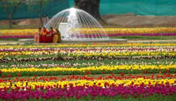 4 Nights 5 Days Tulip Festival Delight