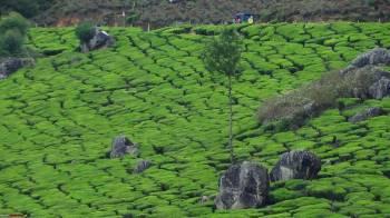 Getaway to Kerala Tour