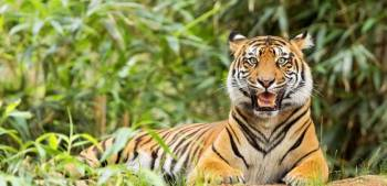 05 Nights / 06 Days Kanha Jabalpur Pench Tour