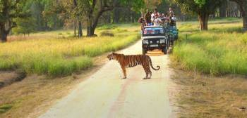 Wildlife Holiday Tour Packages from Delhi