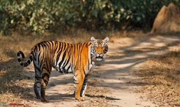 05 Nights / 06 Days Jabalpur, Bandhavgarh, Kanha Tour