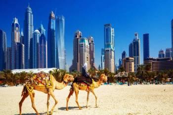 6 Days Dubai Tour