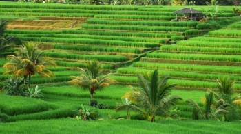 Bali World Heritage Package | Batukaru Temple - Jatiluwih Rice Terraces
