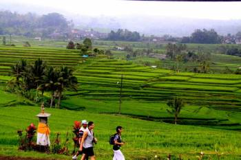Bali World Heritage Package   Batukaru Temple - Jatiluwih Rice Terraces