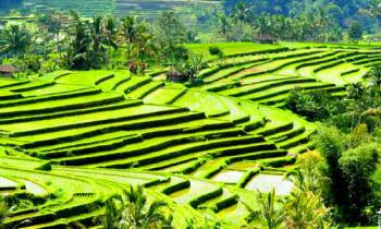 Bali Honeymoon Package   Bali River Tubing