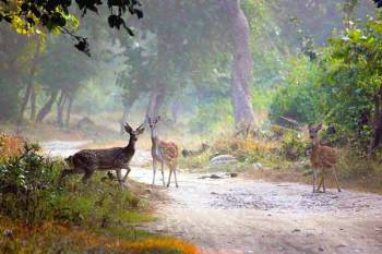 Golden Triangle with Jim Corbett National Park Tour