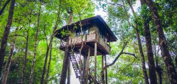 Wayanad with Vythiri Treehouse Tour