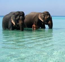 4 Nights 5 Days Andaman With Havelock Tour