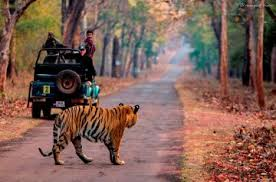 Tadoba Express Tour