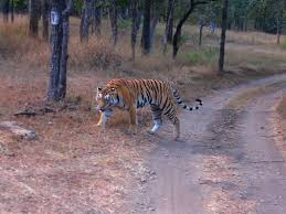 Pench and Kanha Package