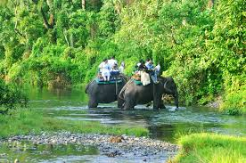 GREEN DOOARS  JUNGLE  TRIP PACKAGE