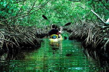 Andaman Havelock Exotica- 5 DAYS and 4 NIGHTS ( FREE SCUBA VOUCHER )