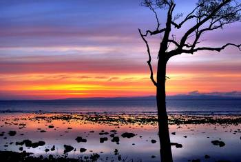 Amazing Affordable  Andaman Packages - 5 Days and 4 Nights ( Free Scuba Voucher )