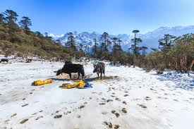 Gangtok  Pelling tour